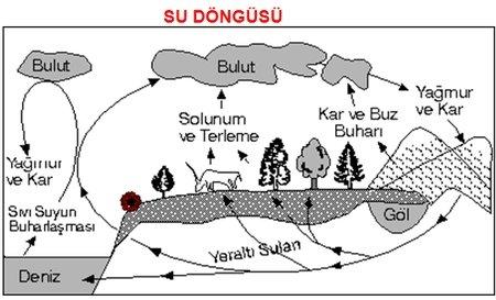 Su D�ng�s� (Hidrolojik Dola��m)